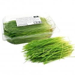 Ростки пшеницы <br>для приготовления <br>соков, смузи и салатов 100 гр.