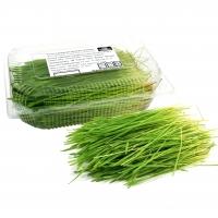 Ростки пшеницы свежесрезанные 8-15 см. 100гр.